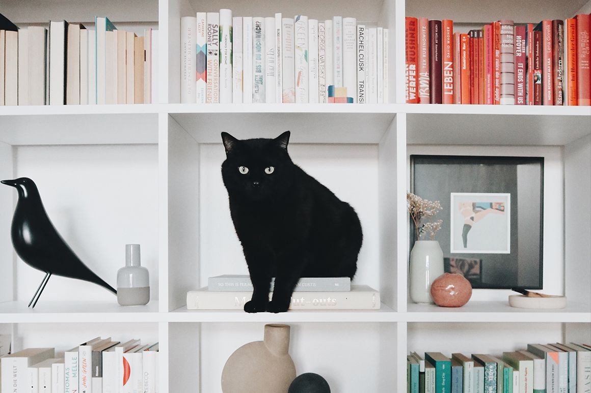 Black cat on a bookcase