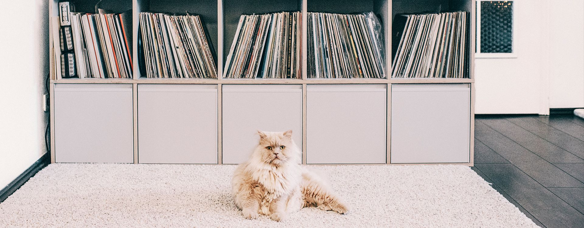 Records look great on Type01 Plywood and the cat knows it
